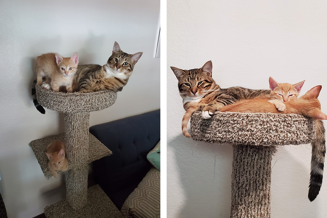 kittiens Ziggy, Tangerine and Marmalade on top cat tower