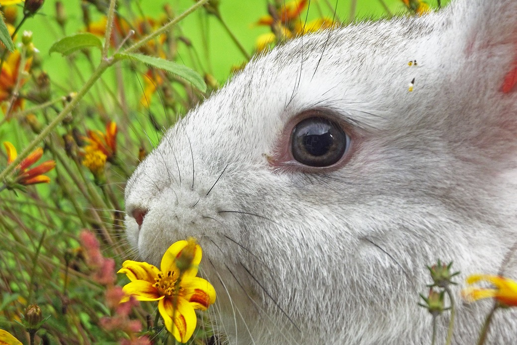 close up on a bunny