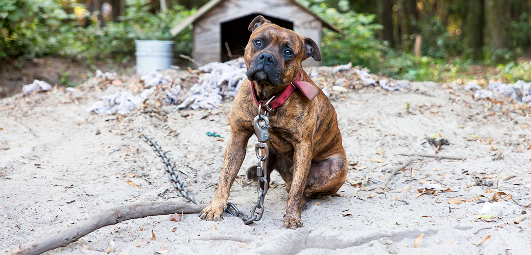What Is Dog Fighting, and What Can You Do To Stop It?