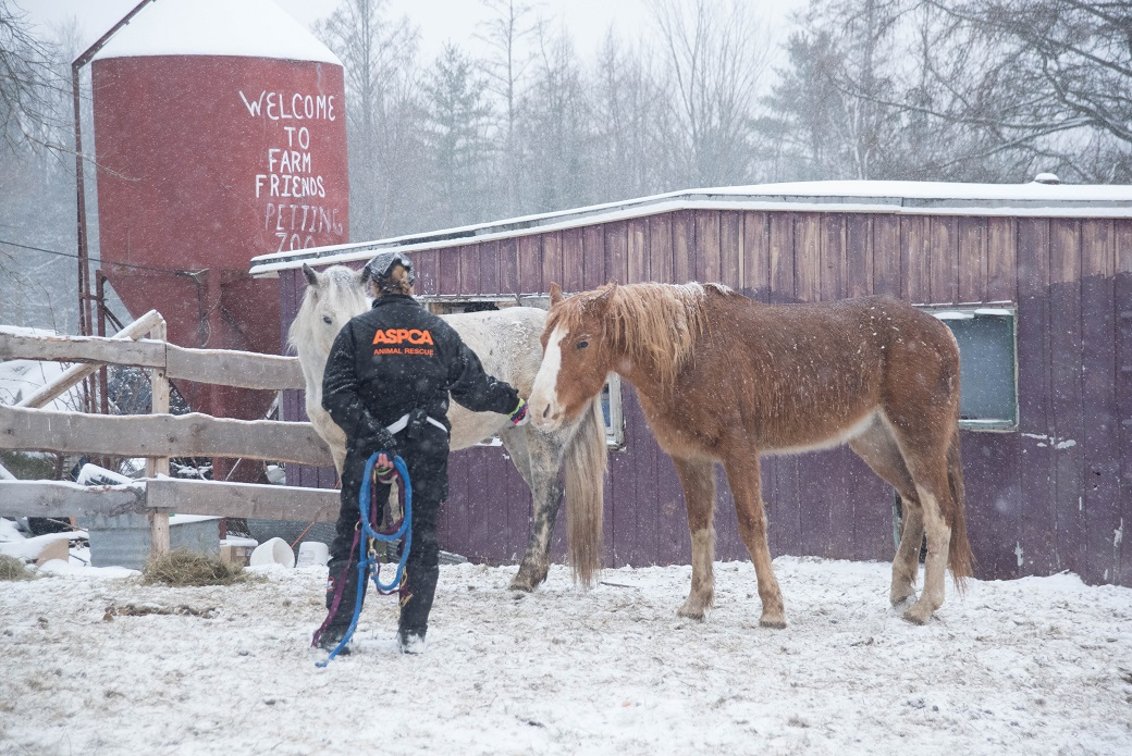 volunteer with horses outside