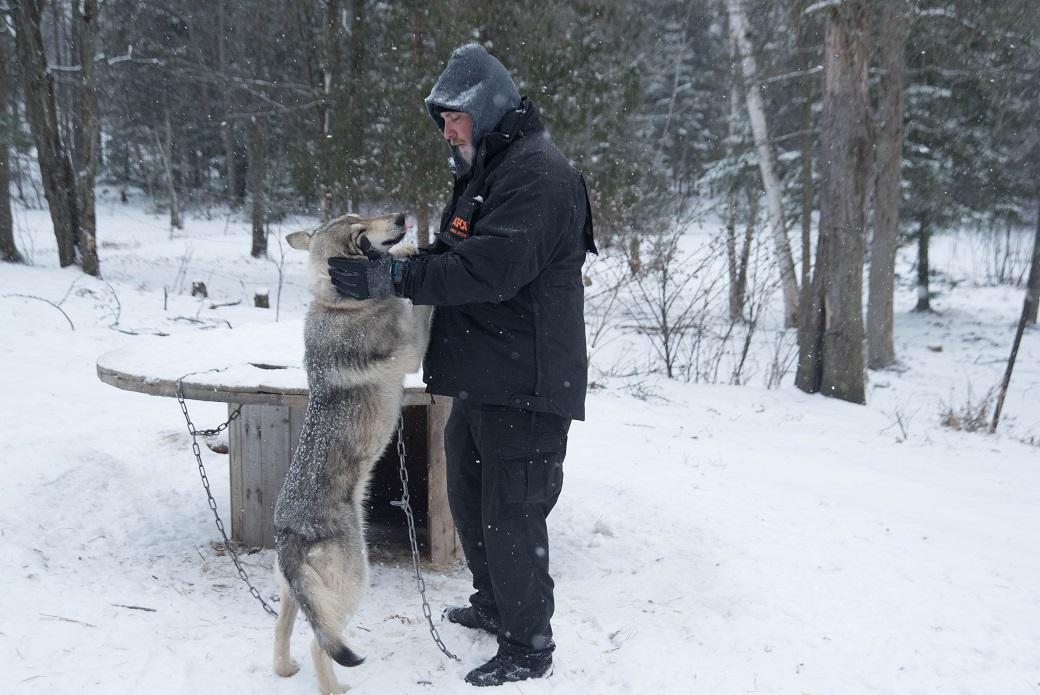 Aspca volunteer greets a wolf-dog