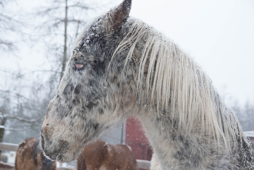Injured horse outside