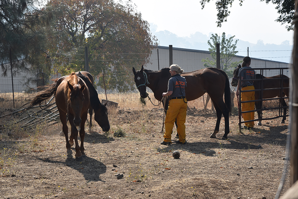 a responder with horses