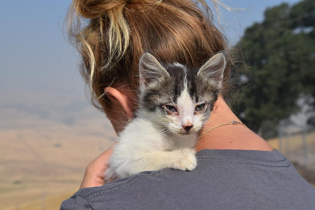 a rescued kitten