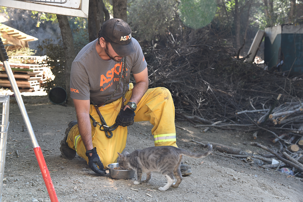 responder with a cat