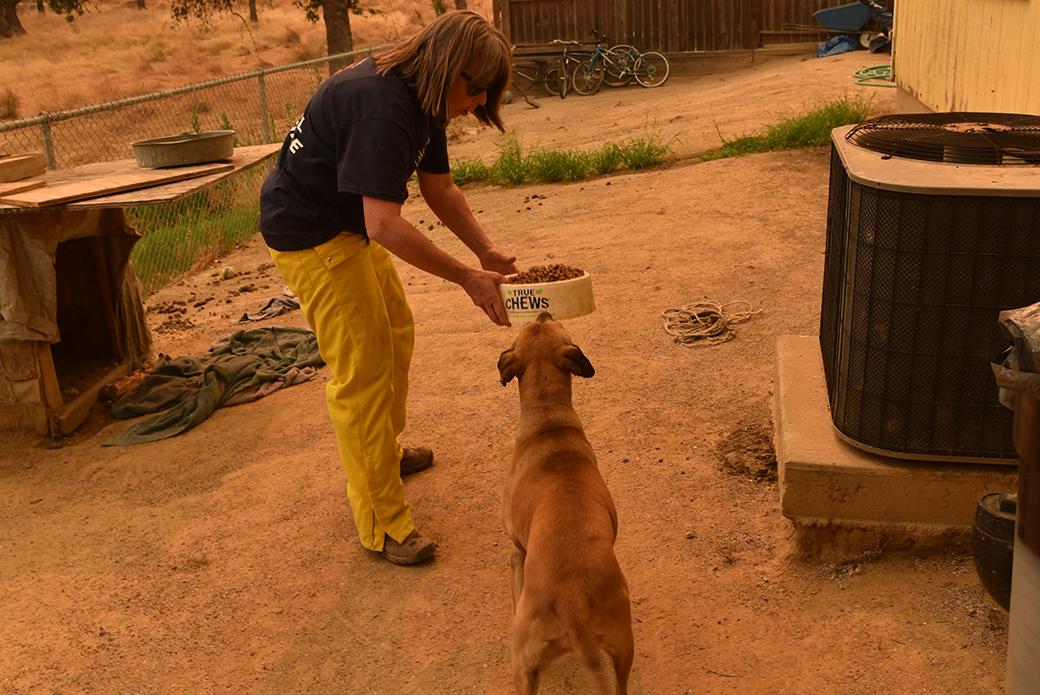 a responder rescuing a dog