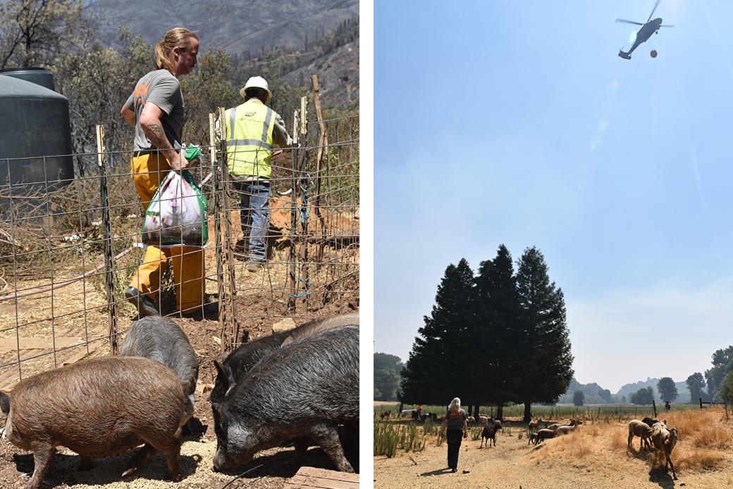 responders recuing animals