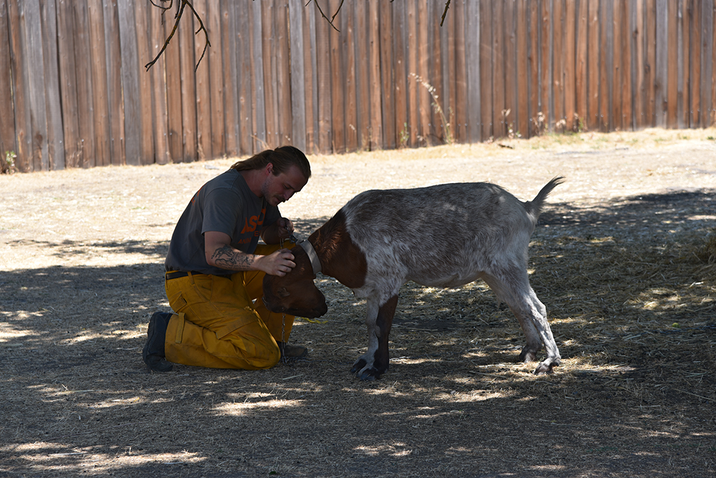a responder with a goat