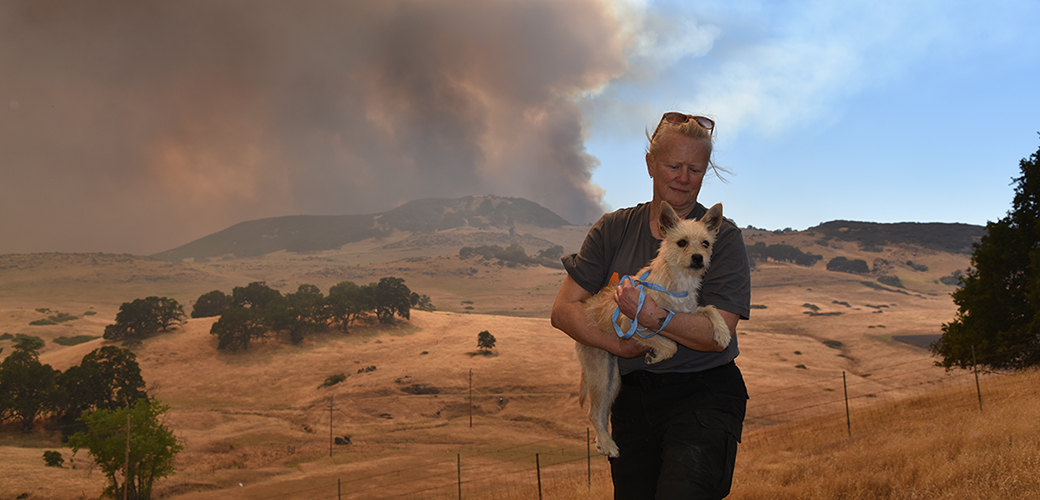 responder rescuing a dog from a wildfire