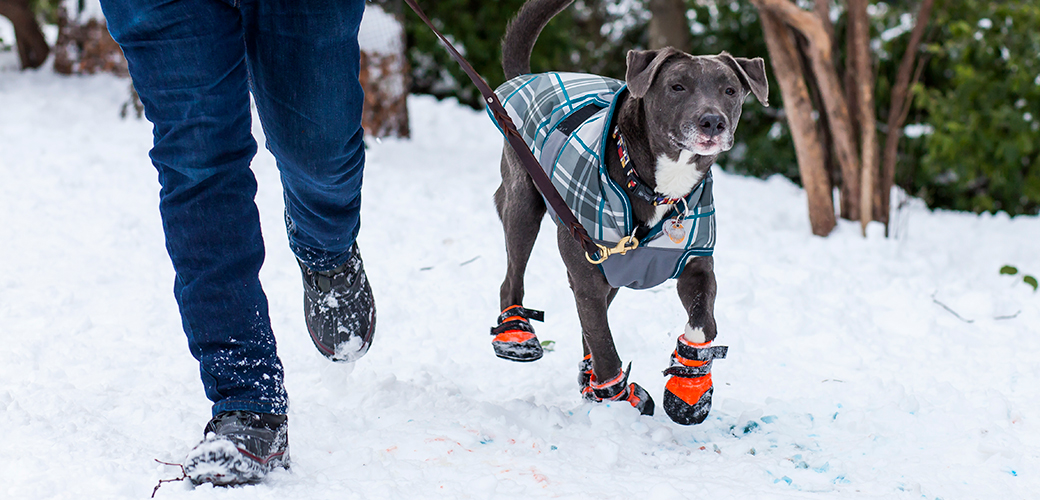 Winter Weather is Upon Us—Are You and Your Pets Prepared? Read Our Safety Tips