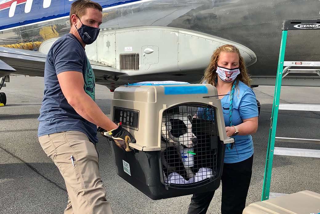 a dog being carried to a plane