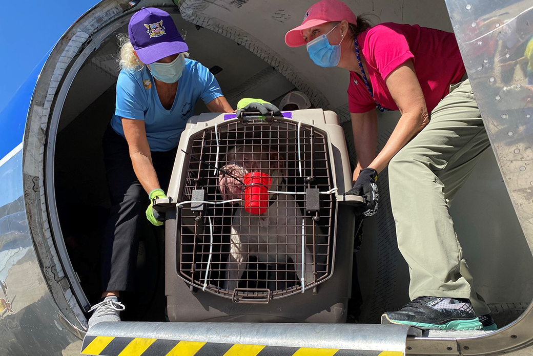 a rescued dog being loaded on a plane