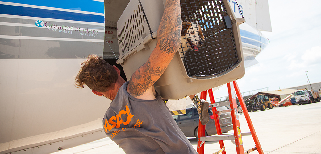 ASPCA Responder loading a rescued dog on a WOR plane