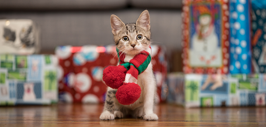 Kitten in a scarf in front of presents
