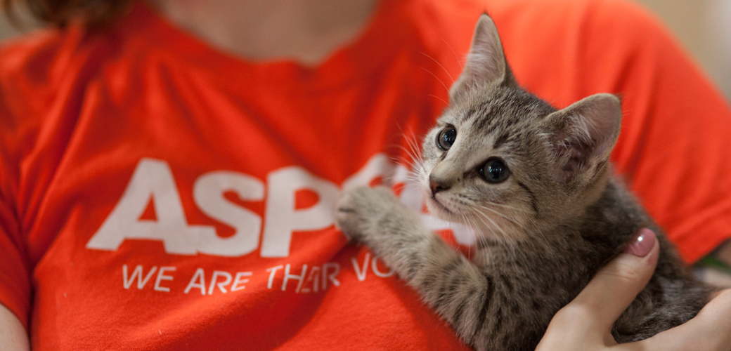 Kitten being held by an ASPCA employee