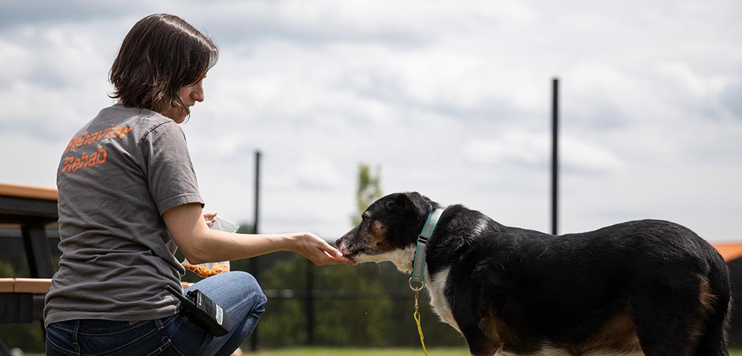 Volunteer at the ASPCA Behavioral Rehabilitation Center