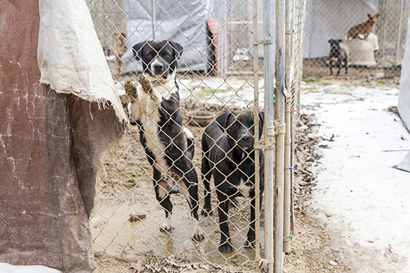 BREAKING: ASPCA Removes Nearly 100 Dogs from Arkansas Facility