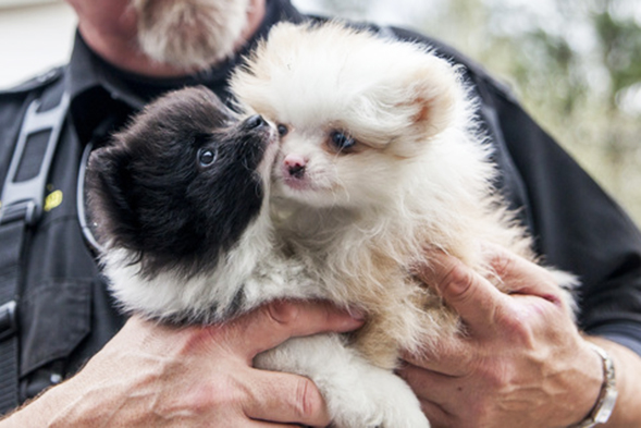 BREAKING: ASPCA Rescues More Than 130 Dogs from Alabama Puppy Mill