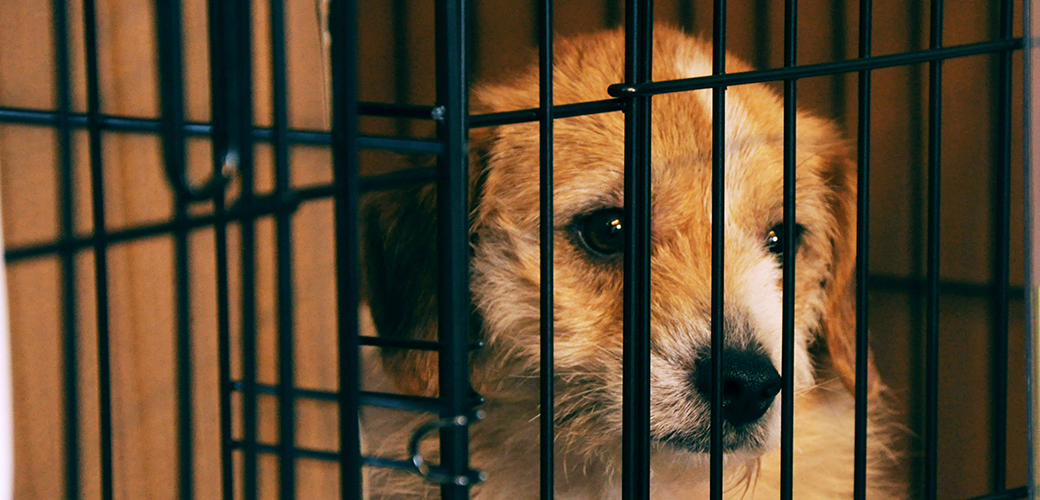 Breaking: Governor Christie Signs New Jersey Bill to Regulate Pet Stores