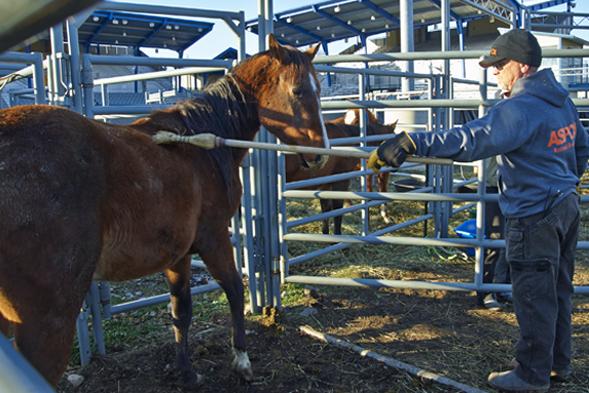 ASPCA FIR responder Bryan Hayes with horse in Spokane, WA