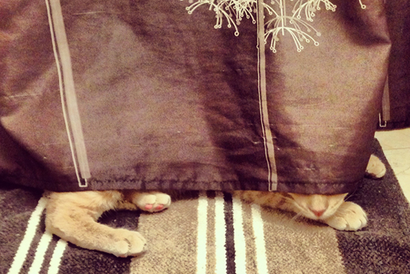 orange cat plays hide-and-seek under couch
