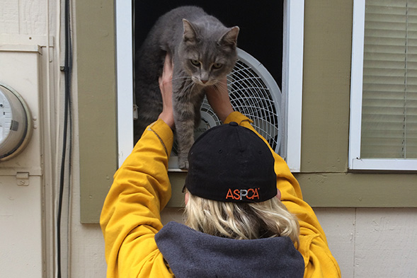 ASPCA Assists Lake County Animal Care & Control in Rescuing Displaced Animals from Devastating California Wildfire