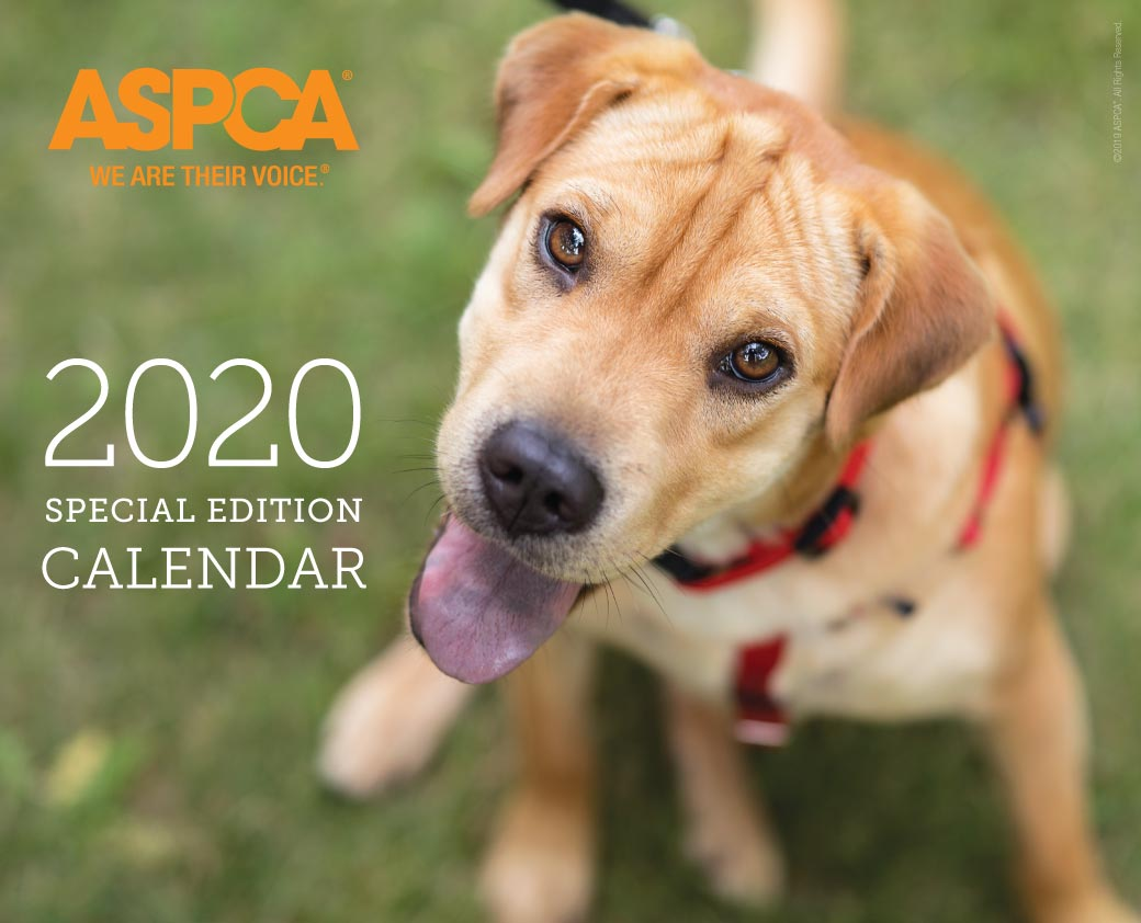 Billie on the 2020 ASPCA Calender Cover