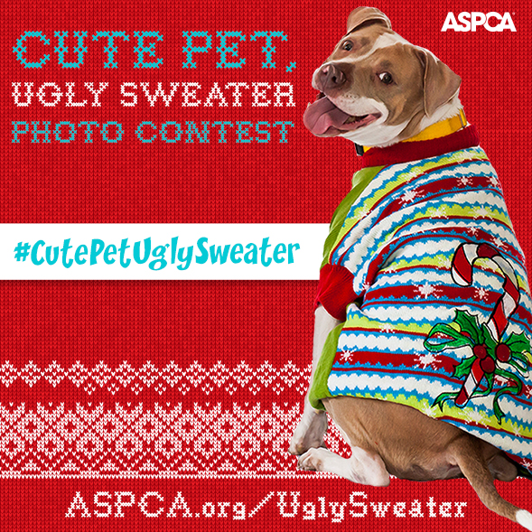 Calling All Cute Pets Wearing Ugly Sweaters! Enter Our Photo Contest