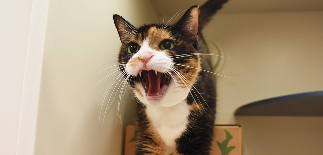 aggression in cats aspca