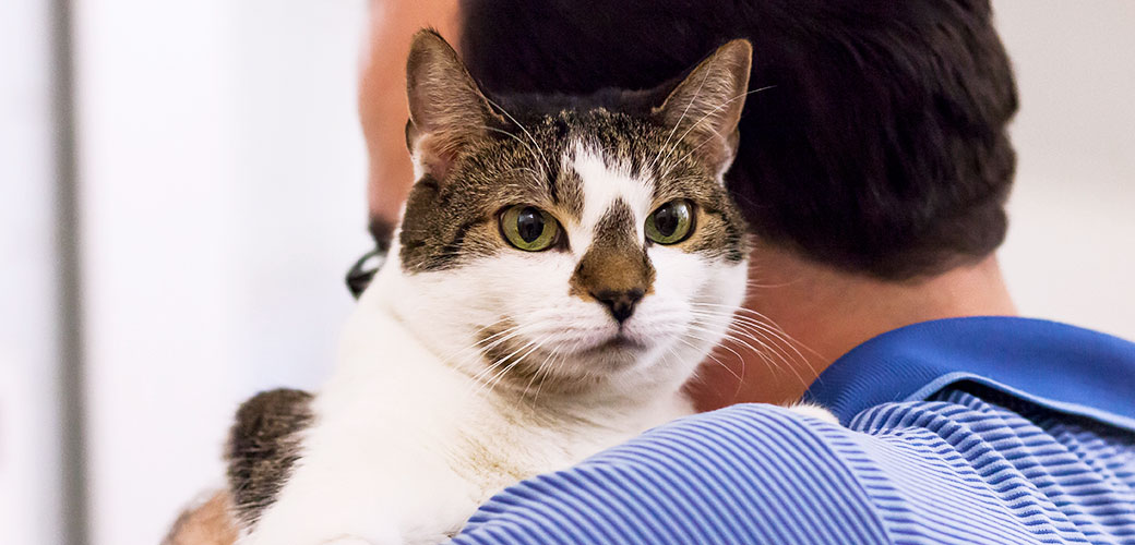 Older Cats with Behavior Problems | ASPCA