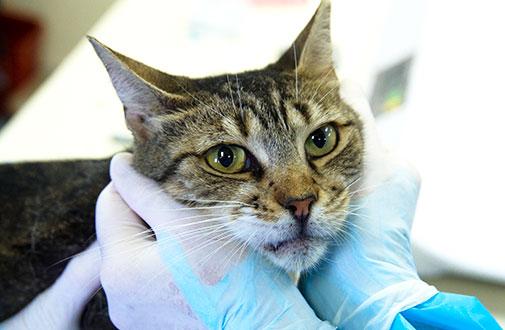 cat grooming tips aspca
