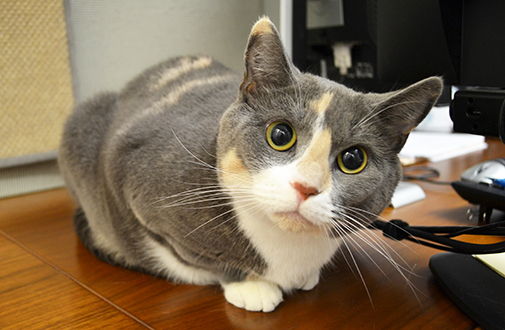 Cat Nutrition Tips