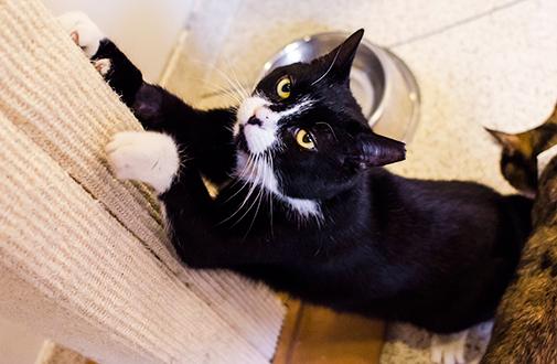General Cat Care Aspca