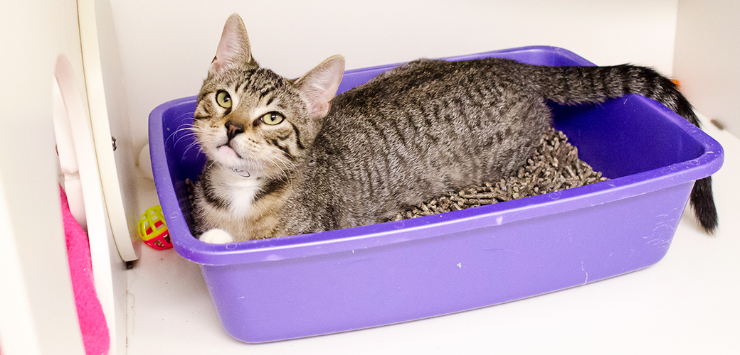 Litter Box Problems Aspca