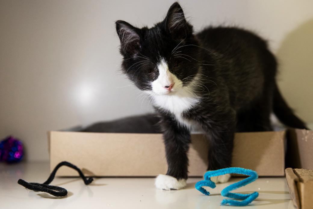 Easy Cat Toys