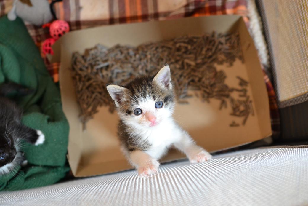 Cat in playpen