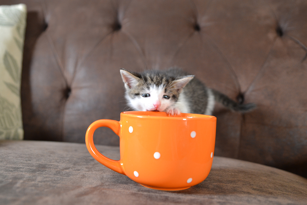 a kitten chewing on a cup