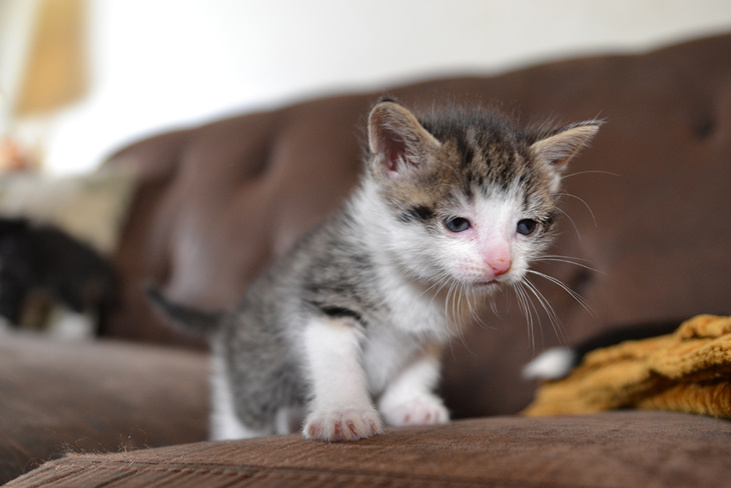 a kitten on a couch