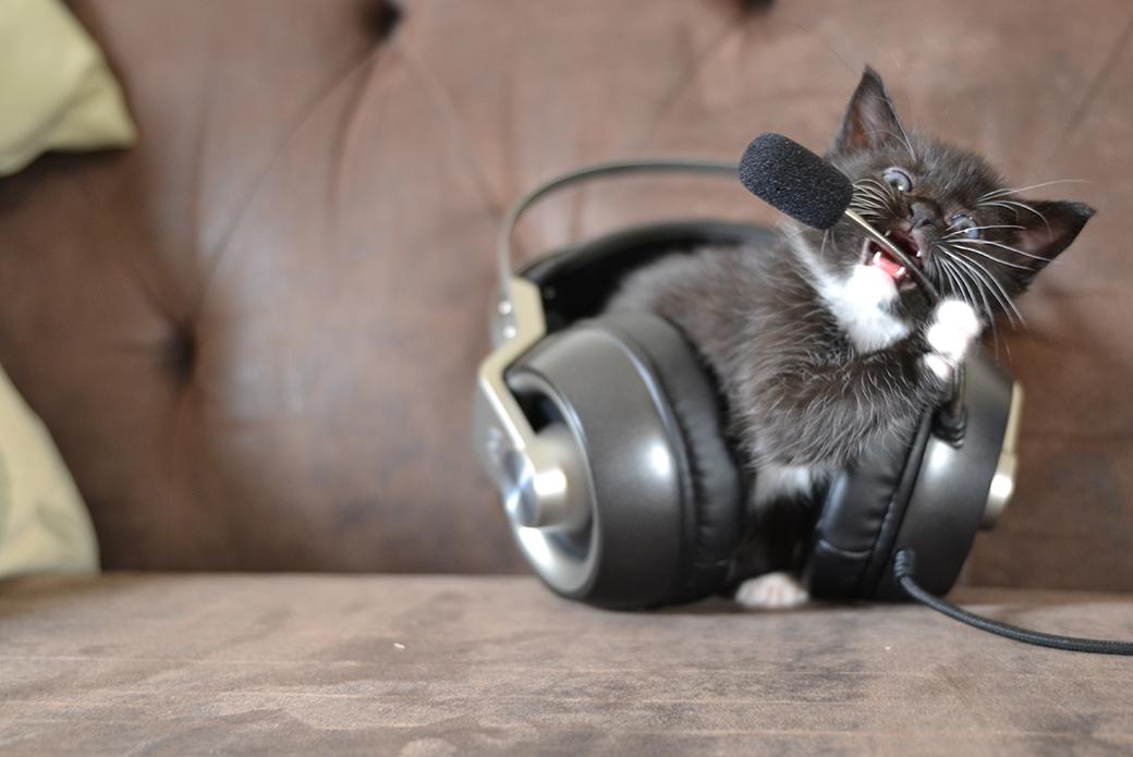 kitten chewing on headphones