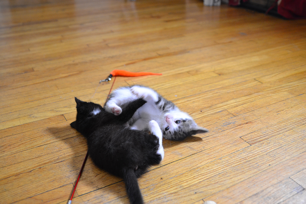 two kittens playing on the floor