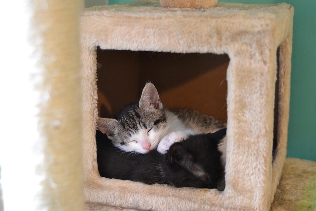 two kittens sleeping in a kitten condo