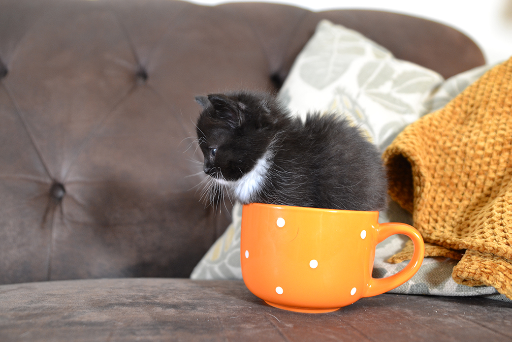 a kitten in a cup