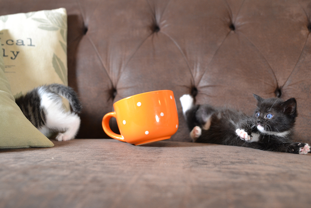 kitten having fallen out of the cup