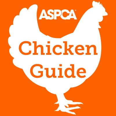 Chicken Guide