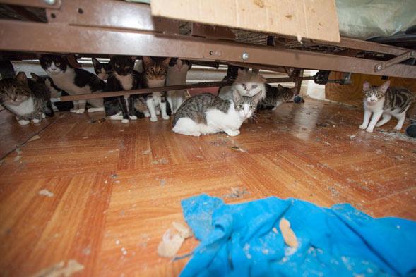 twelve cats under a bed