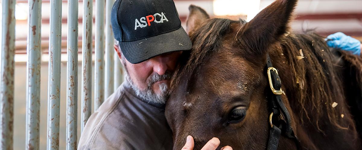Man petting brown horse