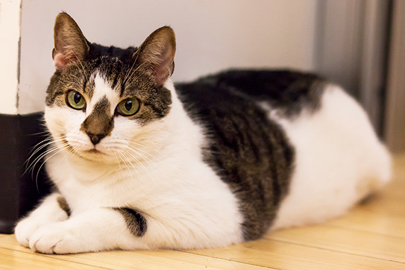 This Adopt a Shelter Cat Month, Consider Bringing Home a Senior Kitty