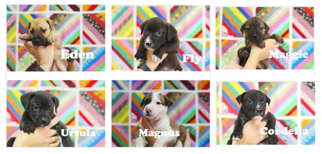 puppies from baldwin humane society