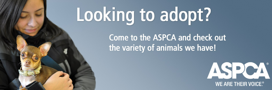 Adopt a Dog, Cat, Puppy, or Kitten from the ASPCA!
