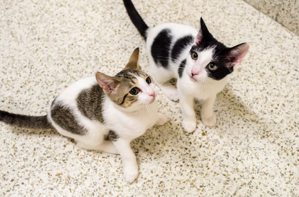 Cashew and Crumpet
